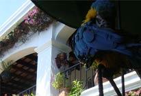 Foto del Hotel SH Santo Tomas del viaje viaje guatemala honduras