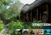serengeti-serena-little