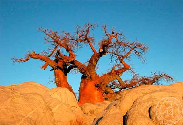 Foto del Viaje baobao-sudafrica.jpg