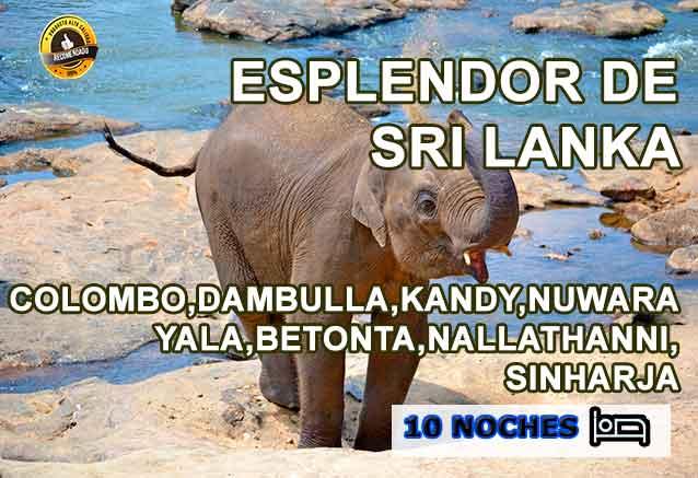 Foto del Viaje esplendor-en-sri-lanka-elefante-bebe.jpg