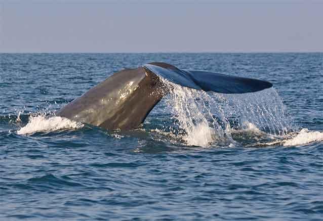 Foto del Viaje safari-ballenas-srilanka-bidtravel.jpg