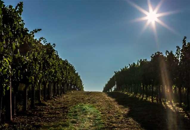 Foto del Viaje vino-serbio.jpg