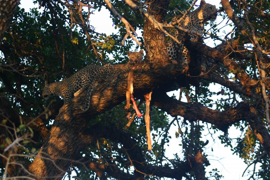 Viaje kenia amboseli 8 dias Picture160 zps4e978b3d