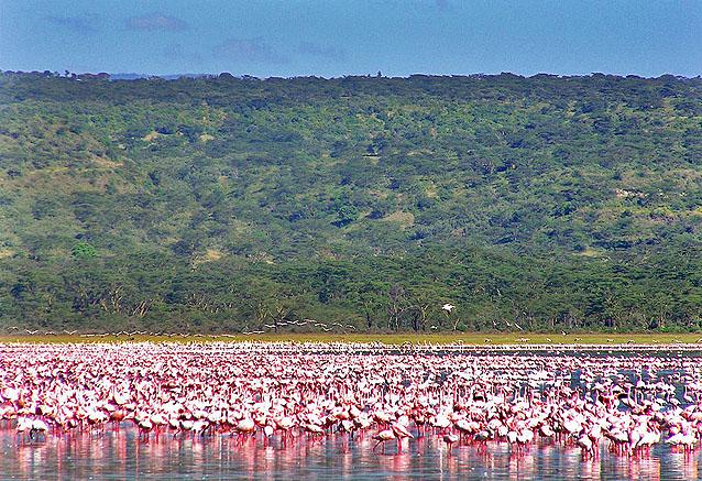 Foto del viaje ofertas kenia amboseli 8 dias lagonaruku