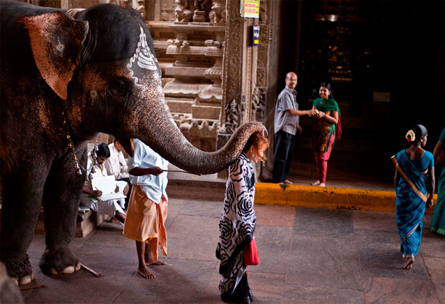 Viaje india todo sur 15 dias Sur de la india elefantes