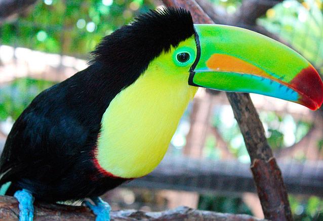 Viaje paraiso exotico Fauna Costa Rica