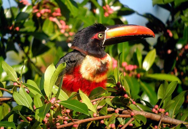 Viaje paraiso exotico Fauna2 Costa Rica