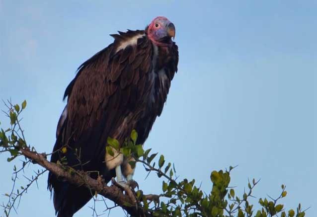 Viaje safari keniata conocedores ave kenia