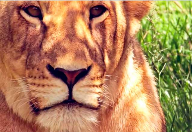 Foto del viaje ofertas safari keniata conocedores safari kenia