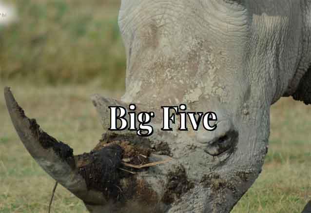 Foto del viaje ofertas safari gran clase rino kenia
