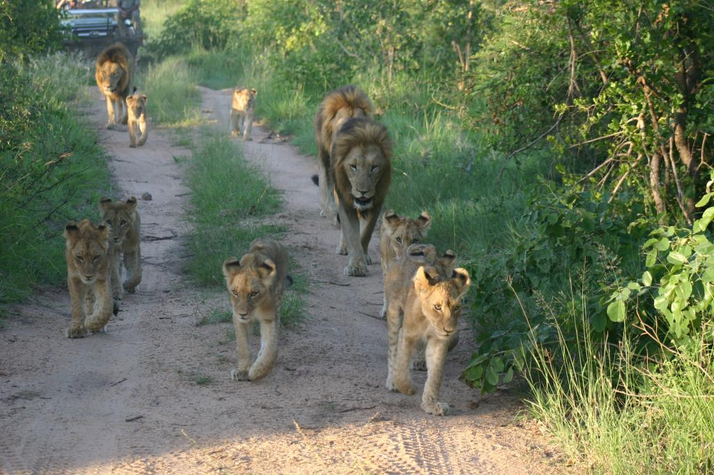 Viaje suspiros keniatas 13 dias Picture190 zps7f5dc716