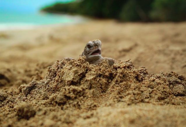 Foto del viaje ofertas colores costa rica oferton tortuga costa rica