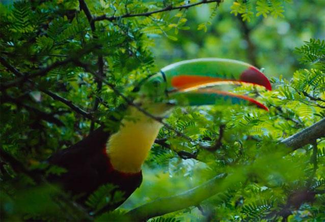 Viaje colores costa rica oferton tucan vede costa rica