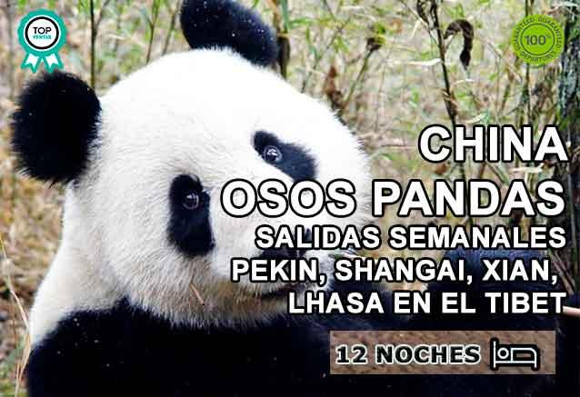 Foto del Viaje oso-panda-china.jpg
