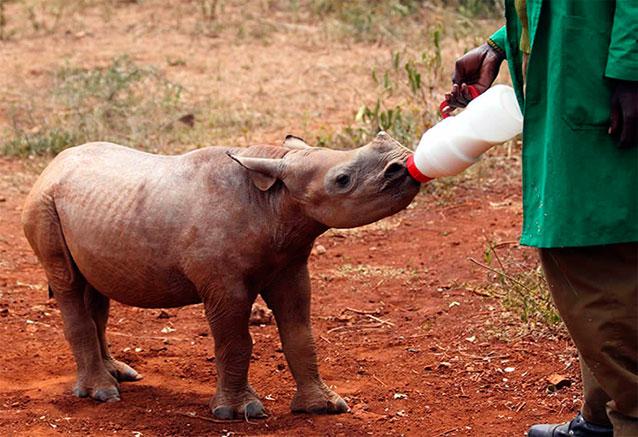 Viaje safari tanzania zanzibar africa 5