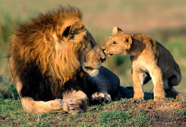 Viaje safari tanzania zanzibar africa 7