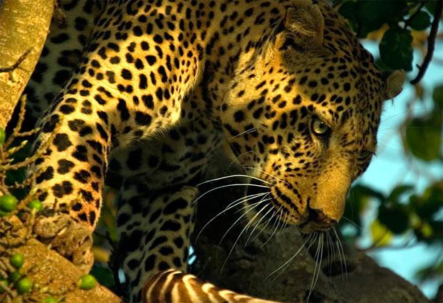 Viaje safari tanzania zanzibar africa 8