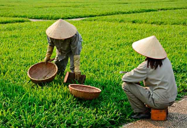 Foto del viaje ofertas vietnam clasico campos de vietnam