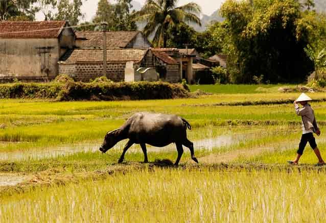 Viaje vietnam clasico siem rep pom penh camboya y vietnam viaje oferta