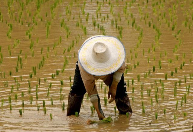 Viaje tailandia esencial tailandia 8
