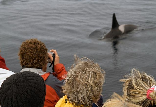 Viaje fiordos lofoten sol media noche Tourists watching orcas Andenes