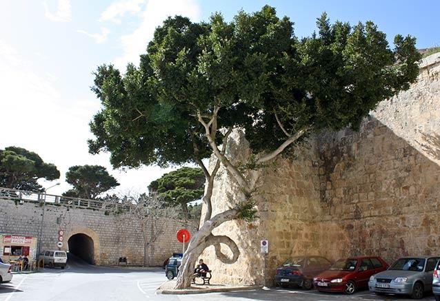 Viaje malta joya del mediterraneo Mdina