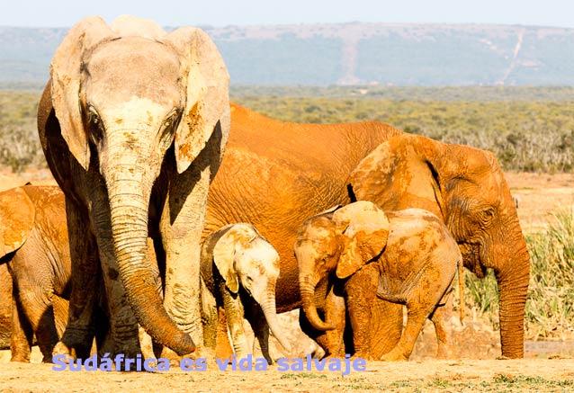 Viaje paisajes sudafrica cataratas sudafrica vida salvaje