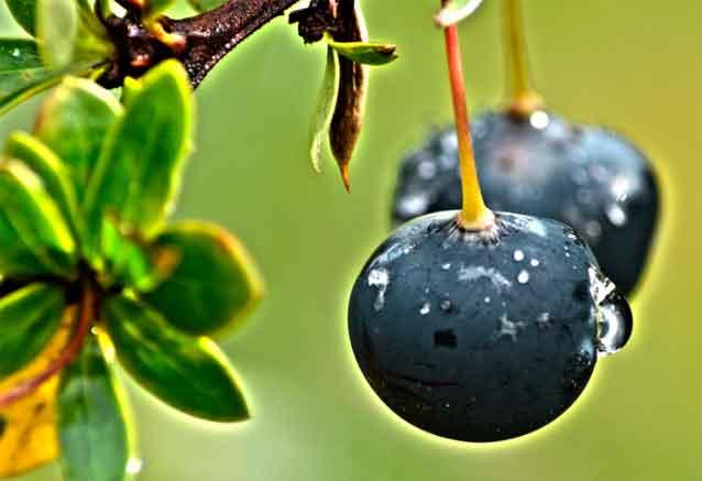 Foto del viaje ofertas lo mejor argentina frutas del calafate