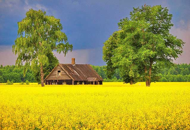 Foto del viaje ofertas viaje paises balticos Campo de nabos en la frontera de Estonia con Lituania, por turismo de Riga