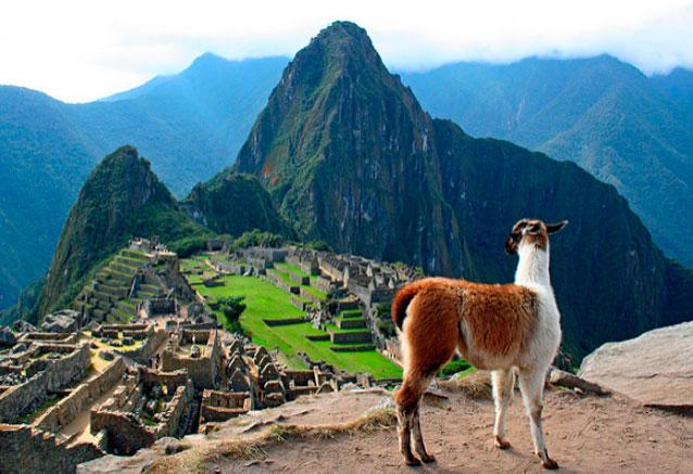 Viaje luces del imperio inca peru llama en el machu pichu de bidtravel corporation