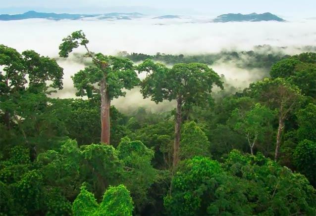 Viaje panama playa ciudad bosque bosque lluvioso panama