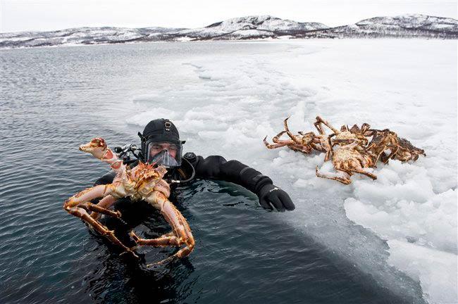 Viaje aventura artico cangrejo real en noruega