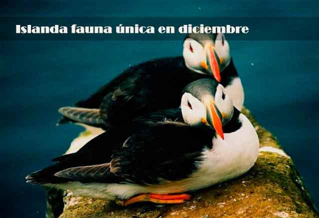 Foto del viaje ofertas islandia puente diciembre islanda fauna