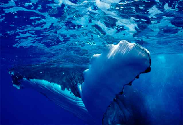 Viaje tahiti sus playas ballena en tahiti