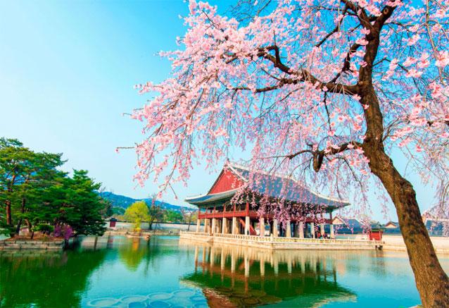Viaje maravillas corea del sur floreciendoencoreadelsur