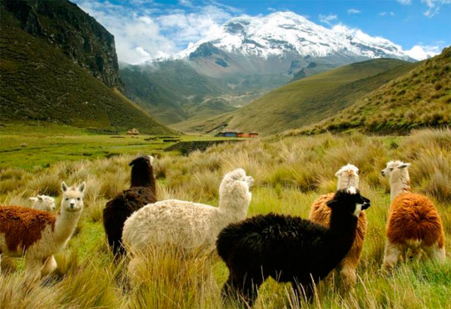 Viaje maravillas ecuador galapagos andes de ecuador