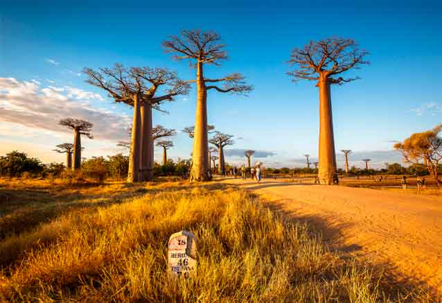 Foto del viaje ofertas madagascar sur malgache madagascar baoba arbol bidtravel